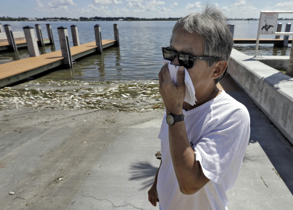 In this Monday Aug. 6, 2018 photo, Alex Kuizon covers his face as he stands near dead fish at a boat ramp in Bradenton Beach, Fla. From Naples in Sout...