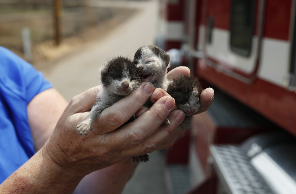 Rose Wyckoff holds up three kittens to a passing fire truck in a neighborhood destroyed by the Carr Fire, Friday, Aug. 10, 2018, in Redding, Calif. Wy...