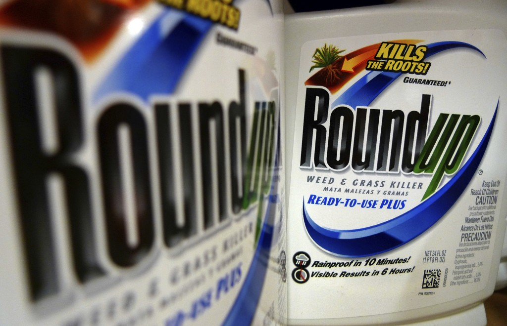 FILE - In this June 28, 2011, file photo, bottles of Roundup herbicide, a product of Monsanto, are displayed on a store shelf in St. Louis. A San Fran