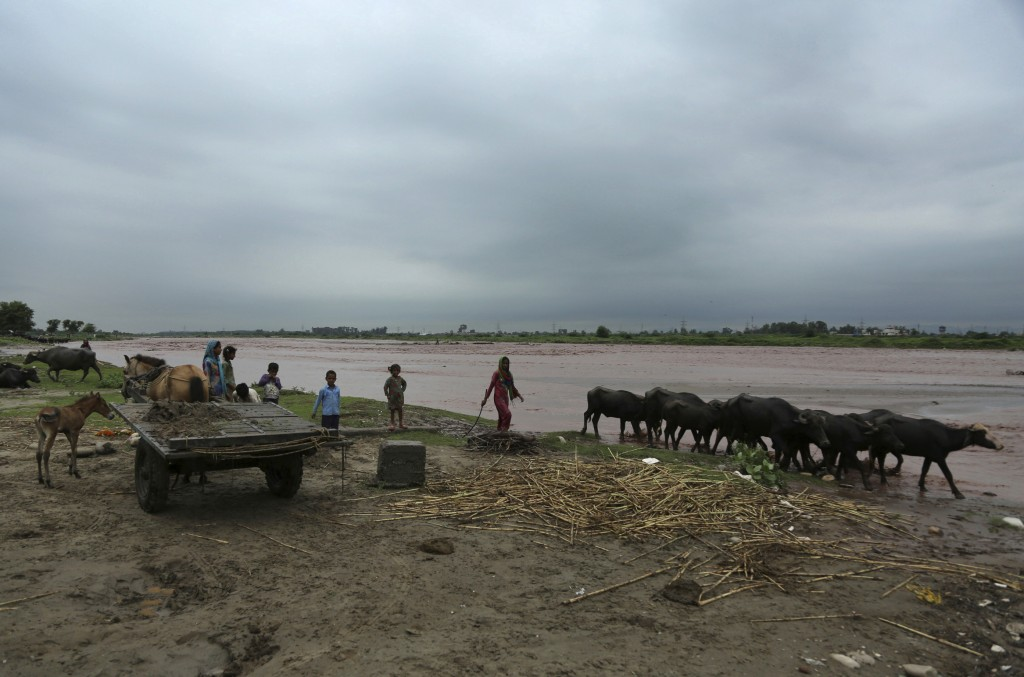 Indian nomads grazing cattle on the banks of the River Tawi watch water levels rising following monsoon rains in Jammu, India, Monday, Aug.13, 2018. I...
