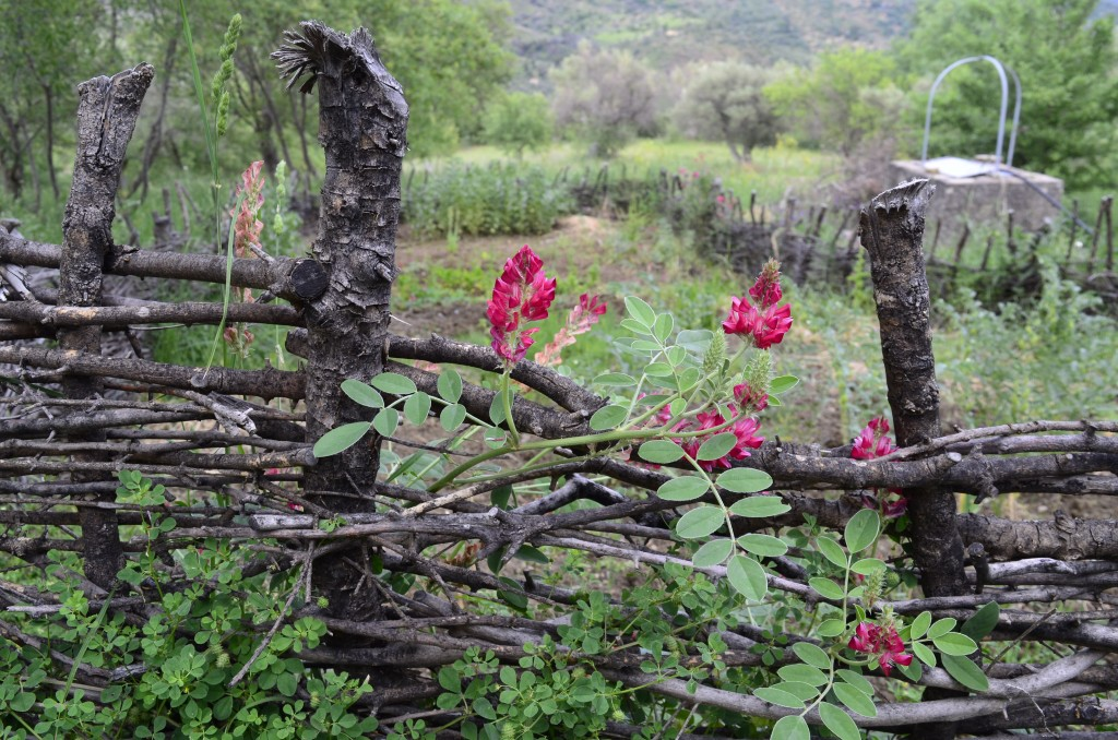 This May 4, 2018 photo shows a wattle fence made to protect a garden on a property in Contrada Petraro in the mountains of northern Sicily. In norther...