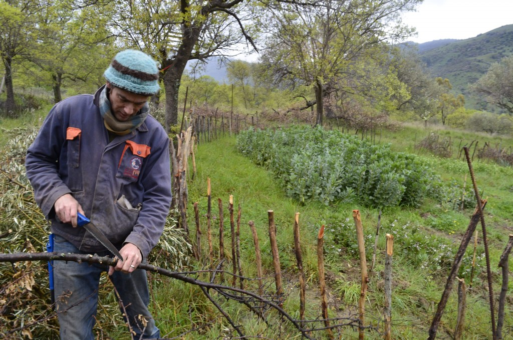 This March 26, 2018 photo shows writer Cain Burdeau cutting to length a branch to make a post for a garden wattle fence he's making on a property he l...