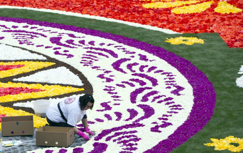 A volunteer lays out a section of the Brussels Flower Carpet on the Grand Place in Brussels, Thursday, Aug. 16, 2018. More than 500,000 flowers were u...