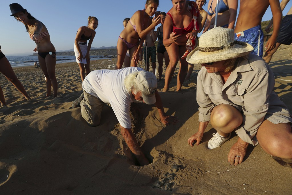 PHOTO GALLERY - In this photo taken on Friday, Aug. 10, 2018, Onlookers surround marine biologists Andreas Demetropoulos, kneeling, center, and Myroul...