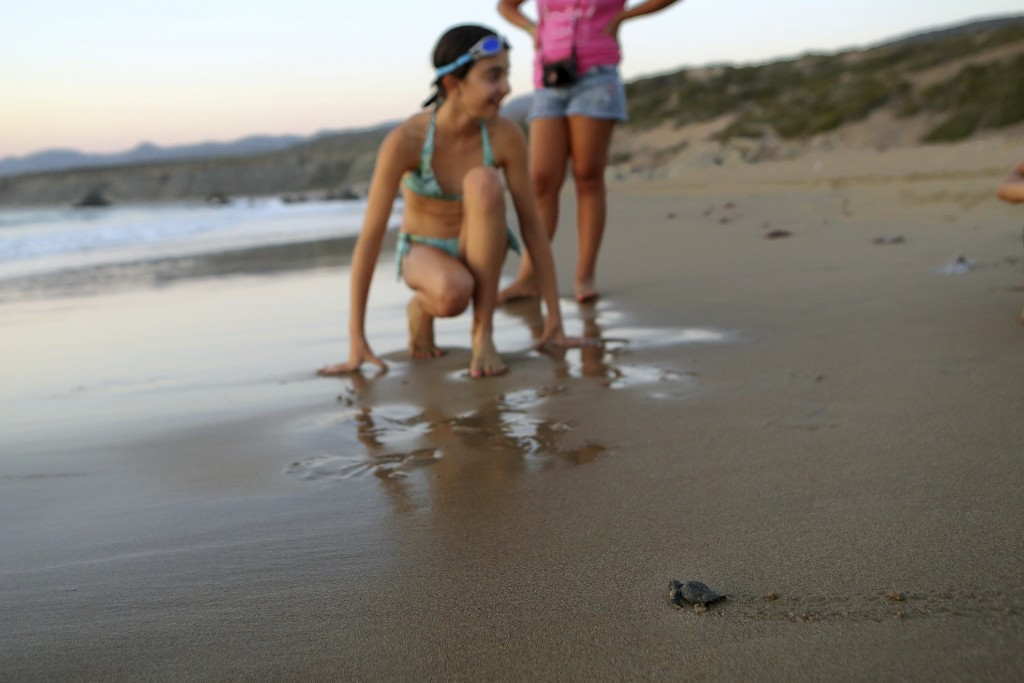 PHOTO GALLERY - In this photo taken on Thursday, Aug. 9, 2018, young onlookers observe a tiny turtle that just hatched trying to reach the waters of t...