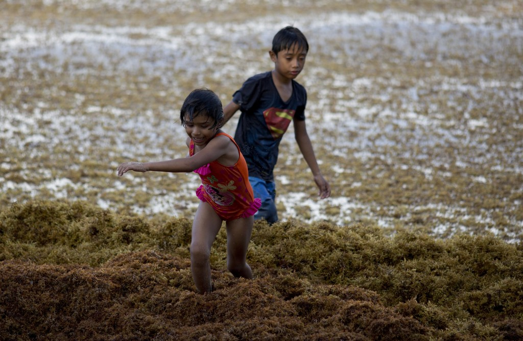 In this Sunday, Aug. 5, 2018 photo, children play on the beach full of sargassum in Bahia La Media Luna, near Akumal in Quintana Roo state, Mexico. A ...