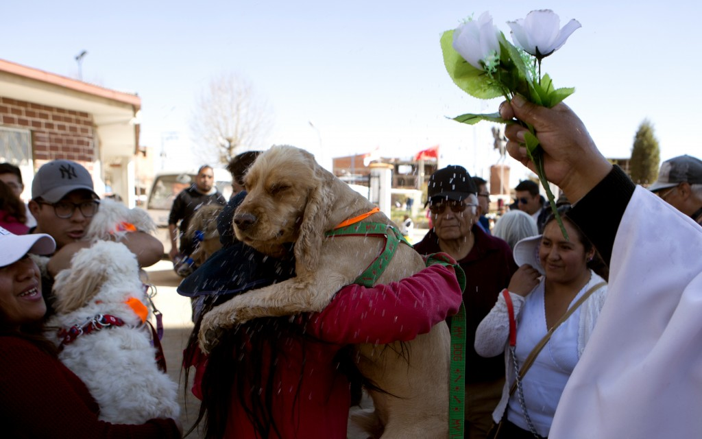 Catholic Priest Justino Limachi blesses dogs by sprinkling them with holy water after a Mass at the parish of Villa Adela to celebrate the feast of Sa...