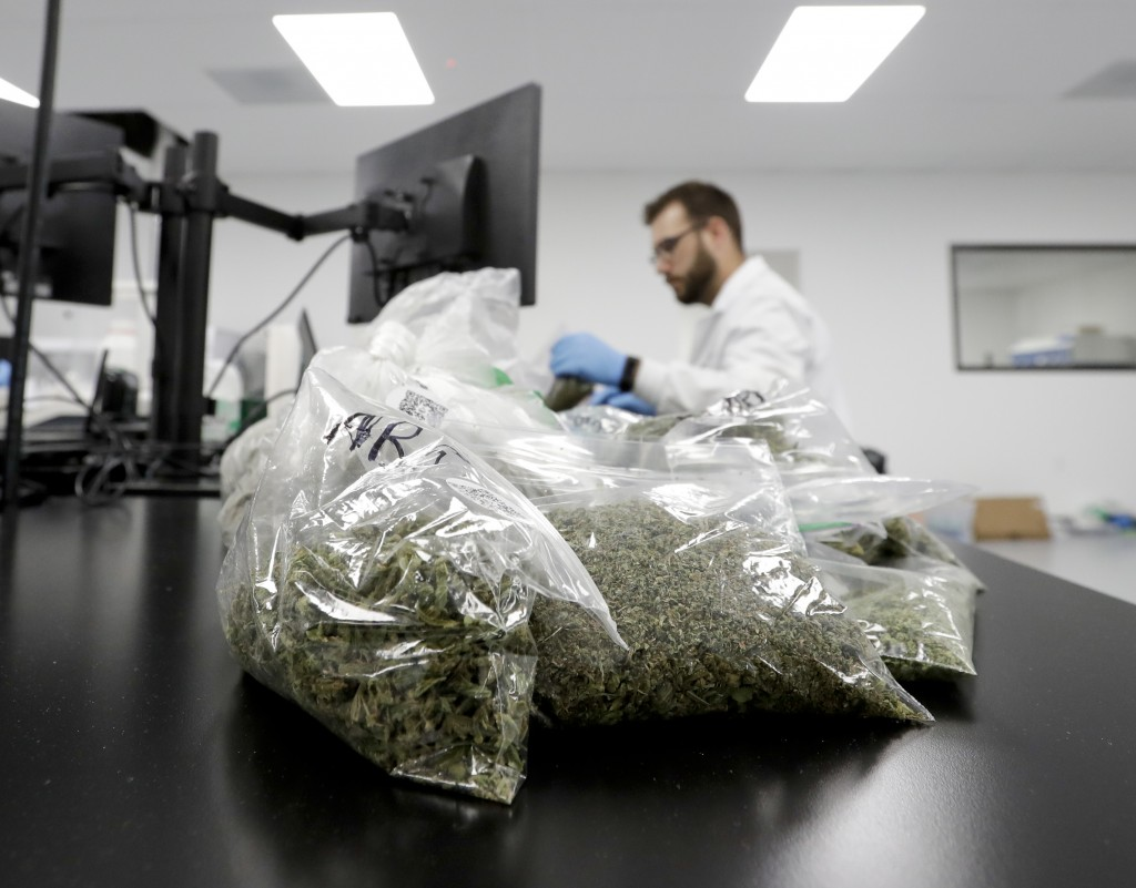 In this Wednesday, Aug. 22, 2018, photo, marijuana samples are piled up for testing at Cannalysis, a cannabis testing laboratory, in Santa Ana, Calif.