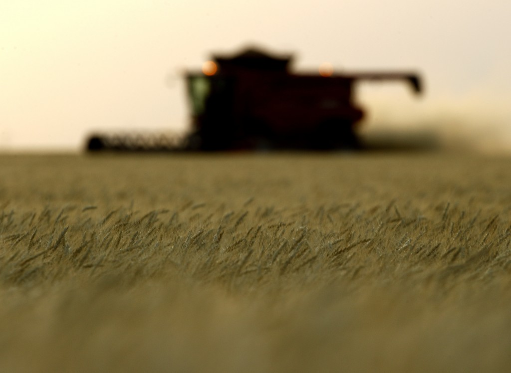FILE- In this June 15, 2018, file photo, winter wheat is harvested in a field farmed by Dalton and Carson North near McCracken, Kan. On Wednesday, Sep...