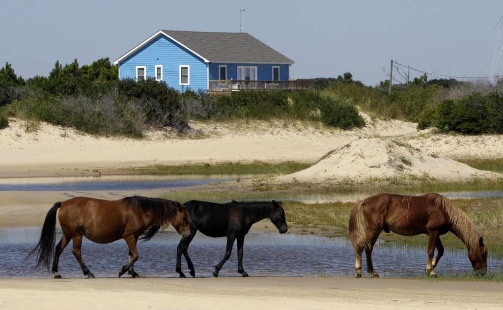 FILE - In this Sept. 14, 2010, file photo, wild horses roam in Corolla, N.C. As North Carolina braces for Hurricane Florence, some tourists and reside