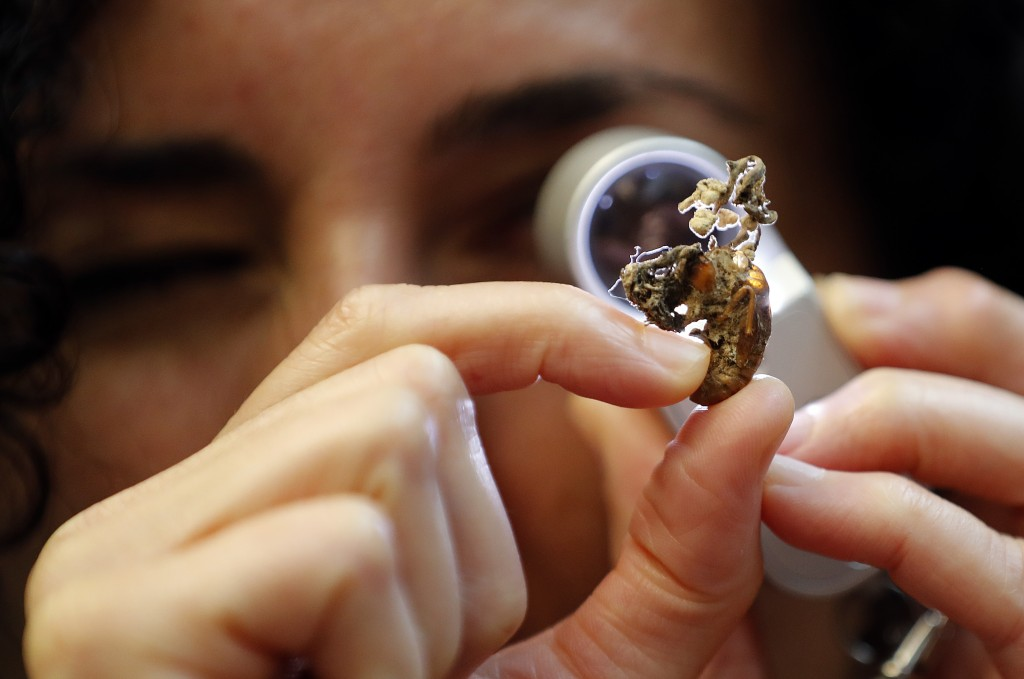 Scientist Ester Gaya examines the fungus Isaria sinclairii on an insect also known as a zombie fungus at Kew Gardens' fungarium in London, Tuesday, Se
