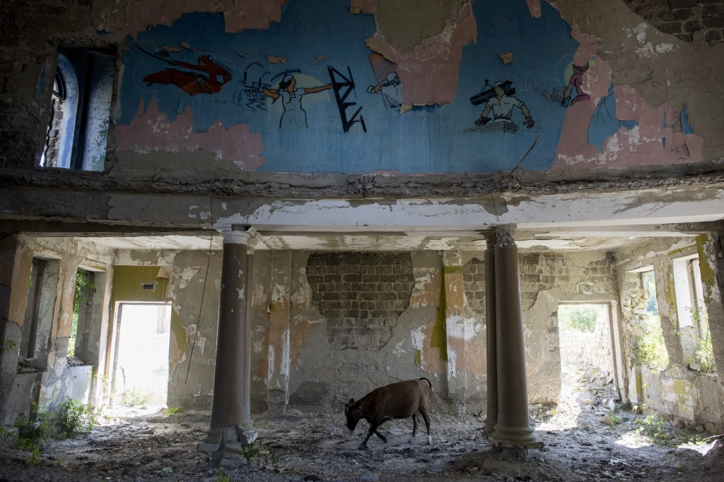 In this photo taken on Wednesday, Aug. 29, 2018, a cow walks inside the soviet style dilapidated building of the Palace of Pioneers near a cable car s