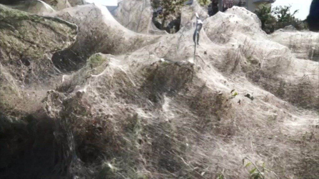 Spiders are 'having a party' in this terrifying 1,000-foot web