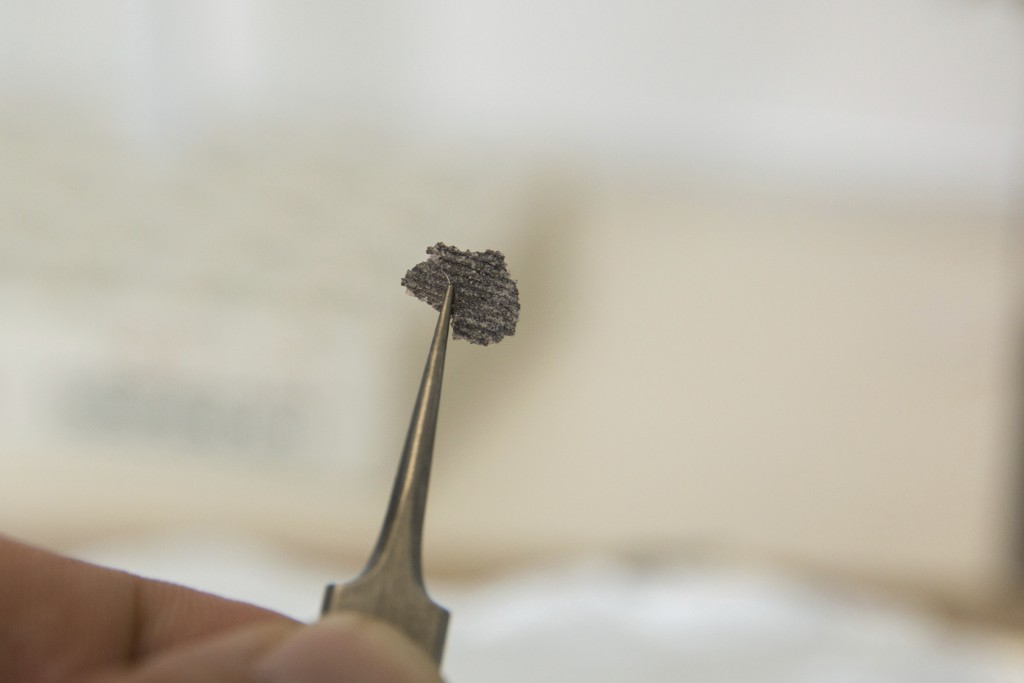 This undated photo provided by Ilya Bobrovskiy in September 2018 shows a fragment from a Dickinsonia fossil. The object is about 5 millimeters (1/5 of