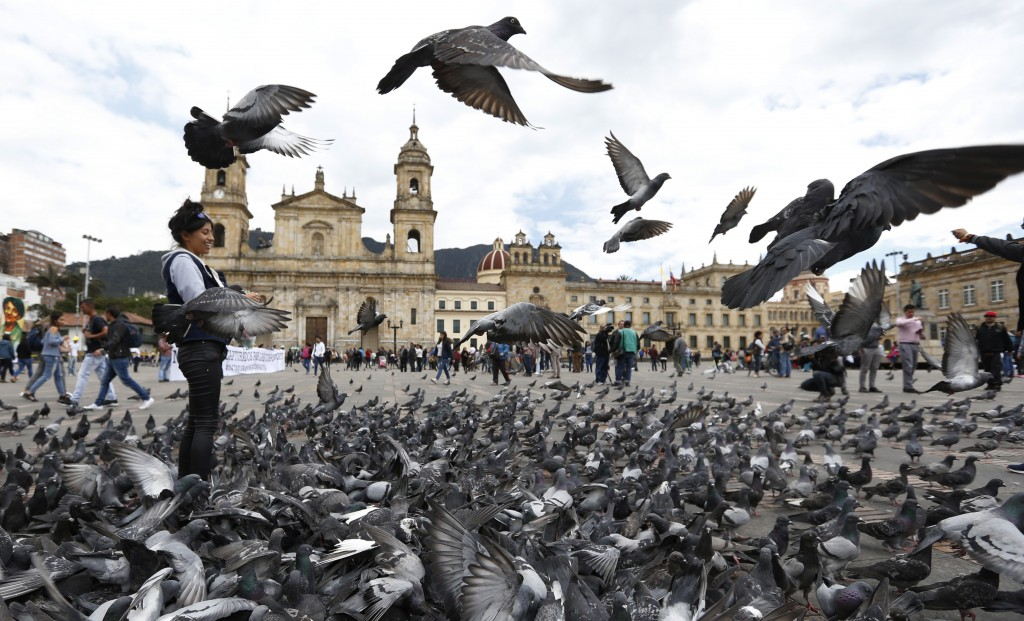 Pigeons fill Bolivar Square in Bogota, Colombia, Tuesday, Oct. 2, 2018. Bogota's government is trying to fight pigeon overpopulation through education...