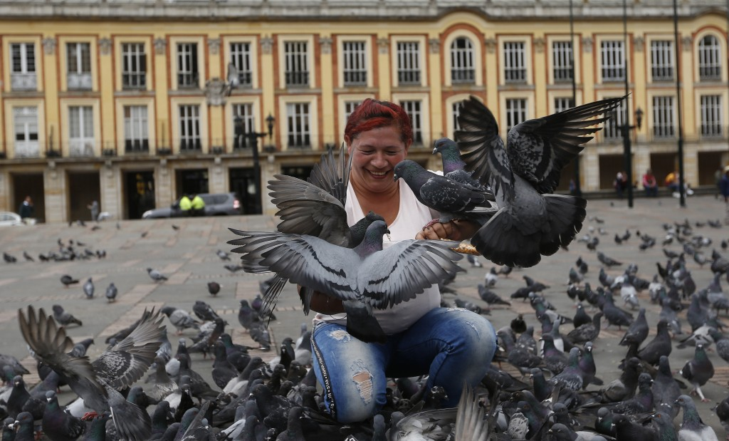 A woman feeds pigeons at Bolivar Square in Bogota, Colombia, Tuesday, Oct. 2, 2018. Colombia's capital is trying to fight pigeon overpopulation by urg...