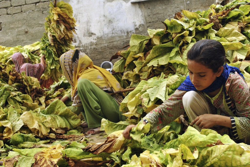 In this Wednesday, July 25, 2018, photo, Ansa Khan, along with elder sister and neighbors, gather tobacco leaves in Mardan, Pakistan. Since 2012 the U