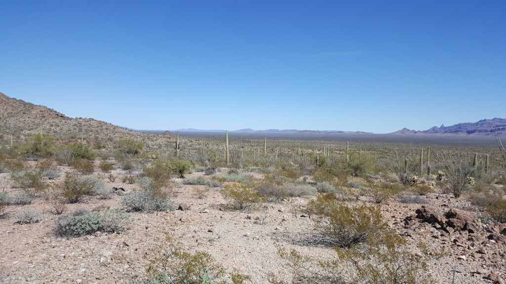 This undated image provided by Tucson Sector Border Patrol shows the desert terrain close to Arizona's boundary with Mexico near Lukeville, Ariz. Larg