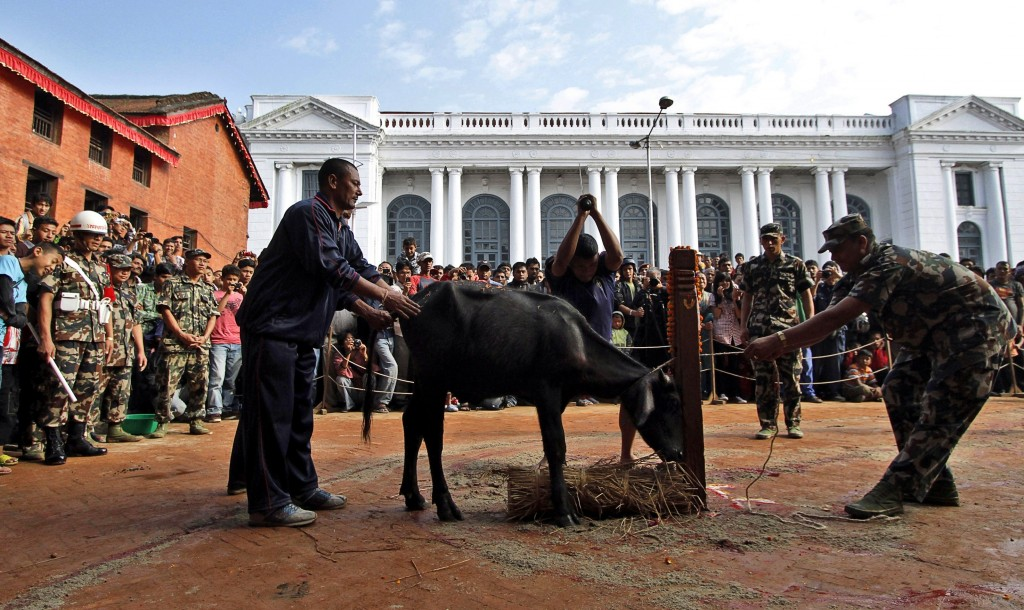 In this Oct. 5, 2011 file photo, Hindu devotees watch a buffalo being butchered outside Taleju temple, open to public only once a year, during Dasain