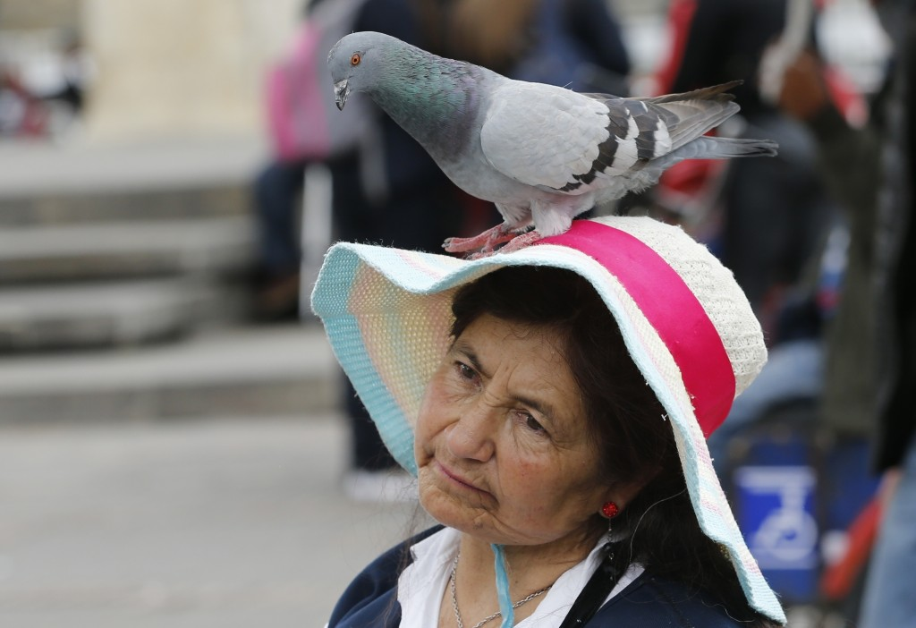In this Tuesday, Oct. 2, 2018 photo, a pigeon perches on the hat of Maria Rodriguez who has been selling corn for about 50 years to tourists to feed p