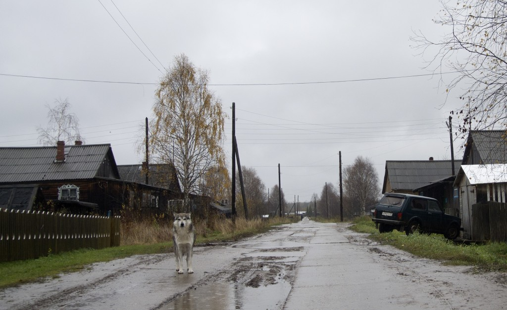 A dog walks on the street in the village of Loyga, northern Russia, Wednesday Oct. 10, 2018. The career trajectories of suspected Russian military int