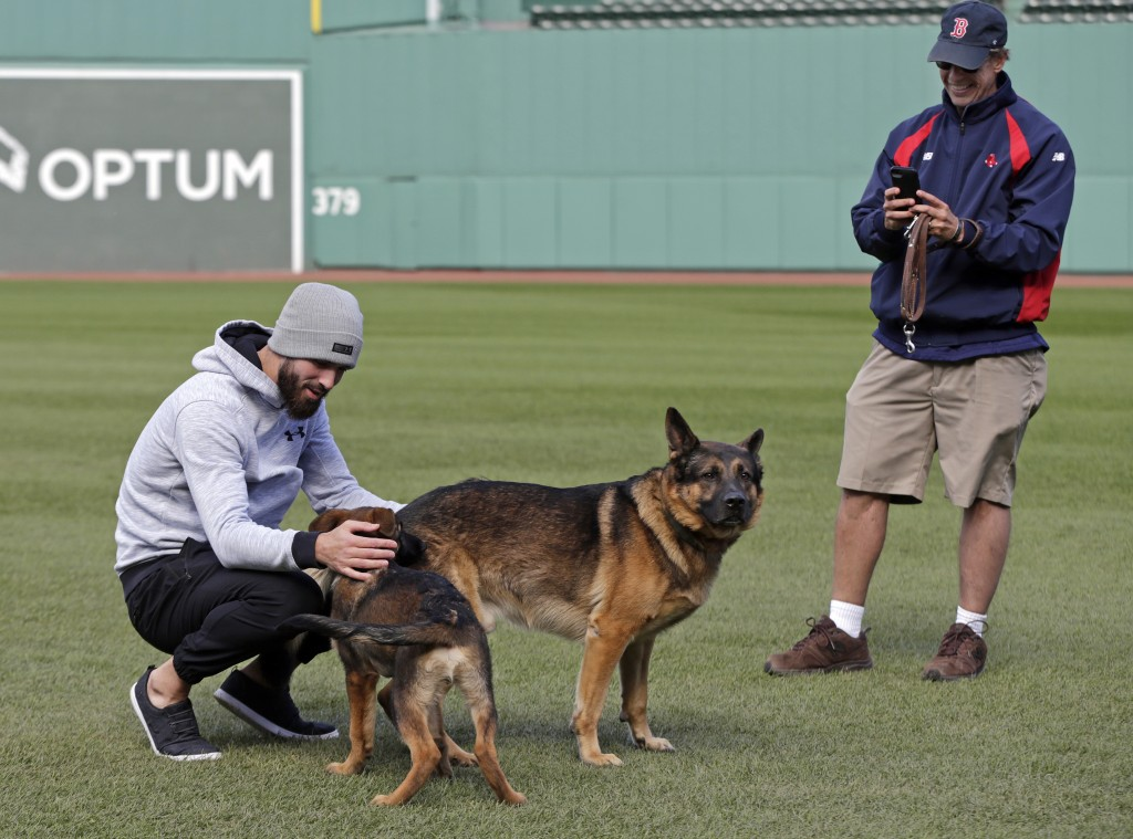 Boston Red Sox pitcher Rick Porcello, left, plays with his 4-month-old puppy, Bronco, whose father is service dog, Drago, owned by head groundskeeper ...