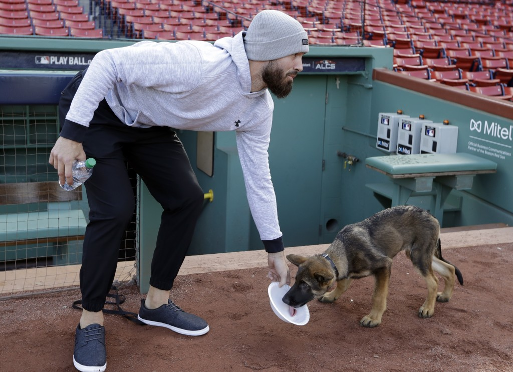 Boston Red Sox pitcher Rick Porcello gives water to his four-month-old puppy, Bronco, during a baseball workout at Fenway Park, Sunday, Oct. 21, 2018,...