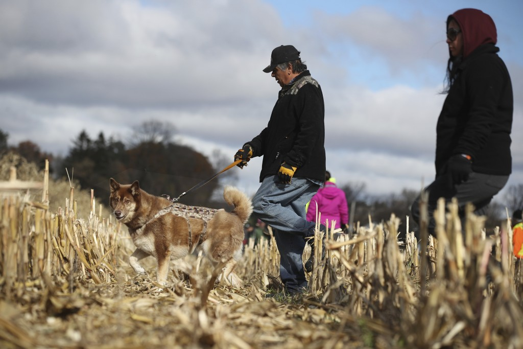 Steven Fowler of luck Wis., and his dog Cheeka search a cornfield along 15th Ave. near highway 25 just North of Barron, Wis., Tuesday, Oct. 23, 2018, ...