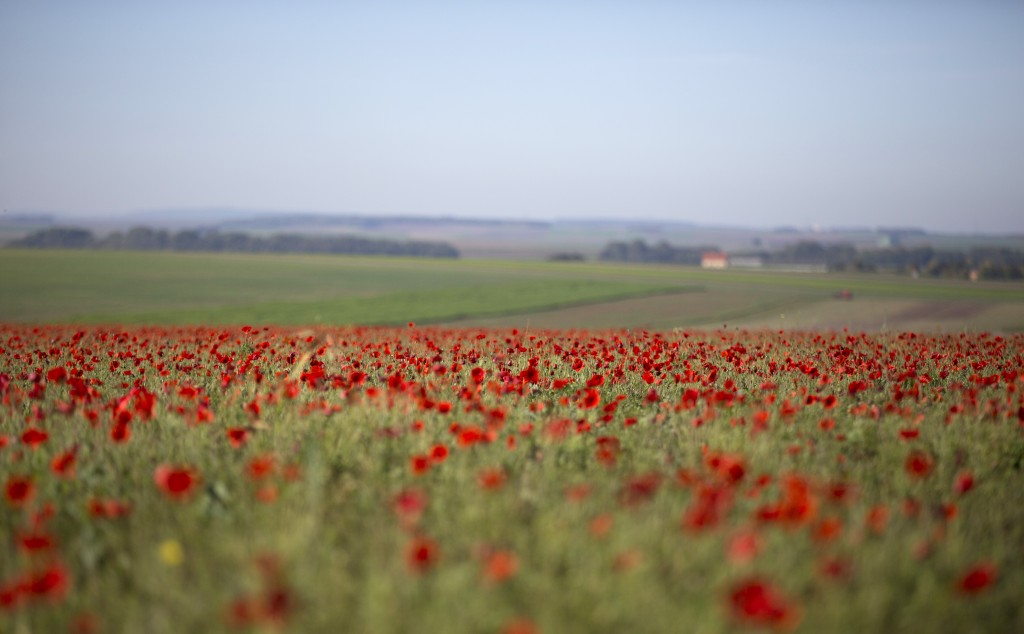 FILE - In this Wednesday, Oct 14, 2014 file photo, poppies are in full bloom in a field near Sommepy-Tahure, France. After the United States declared