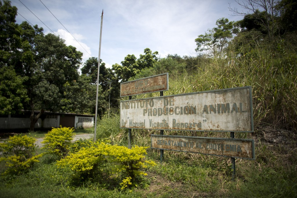 This Oct 26, 2018 photo, shows the run down sign of the Animal Production Institute of the Central University of Venezuela, in Maracay, Venezuela. The