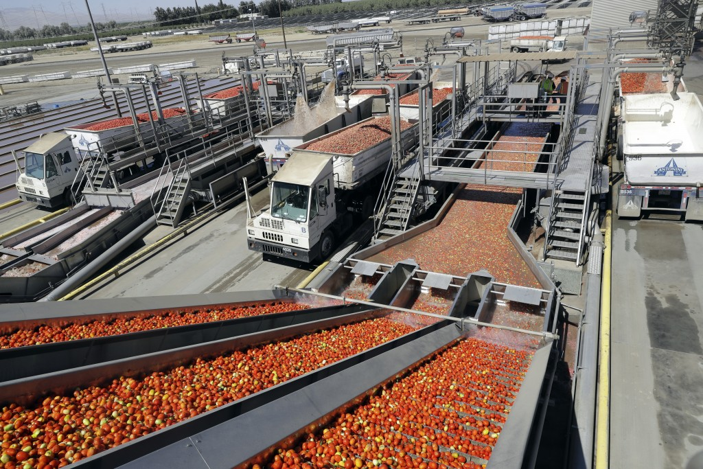 FILE- In this Sept, 17, 2018, file photo tomatoes go through a washing process at the Los Gatos Tomato Products plant in Huron, Calif. On Friday, Nov.