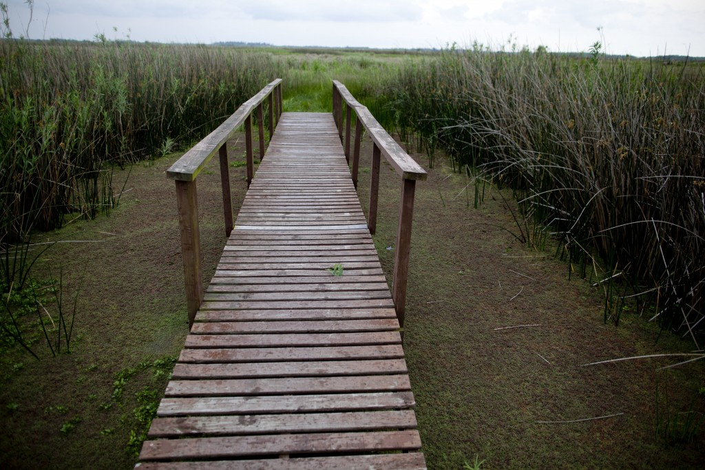"In this Oct. 18, 2018 photo, a wooden walk way stands at the ""Ciervo de los Pantanos"" National Park near Buenos Aires, Argentina. The park is named fo"