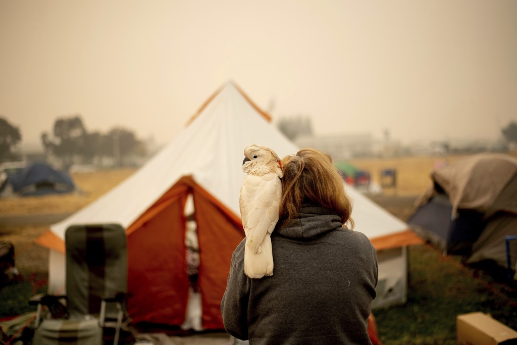 Suzanne Kaksonen, an evacuee of the Camp Fire, and her cockatoo Buddy camp at a makeshift shelter outside a Walmart store in Chico, Calif., on Wednesd