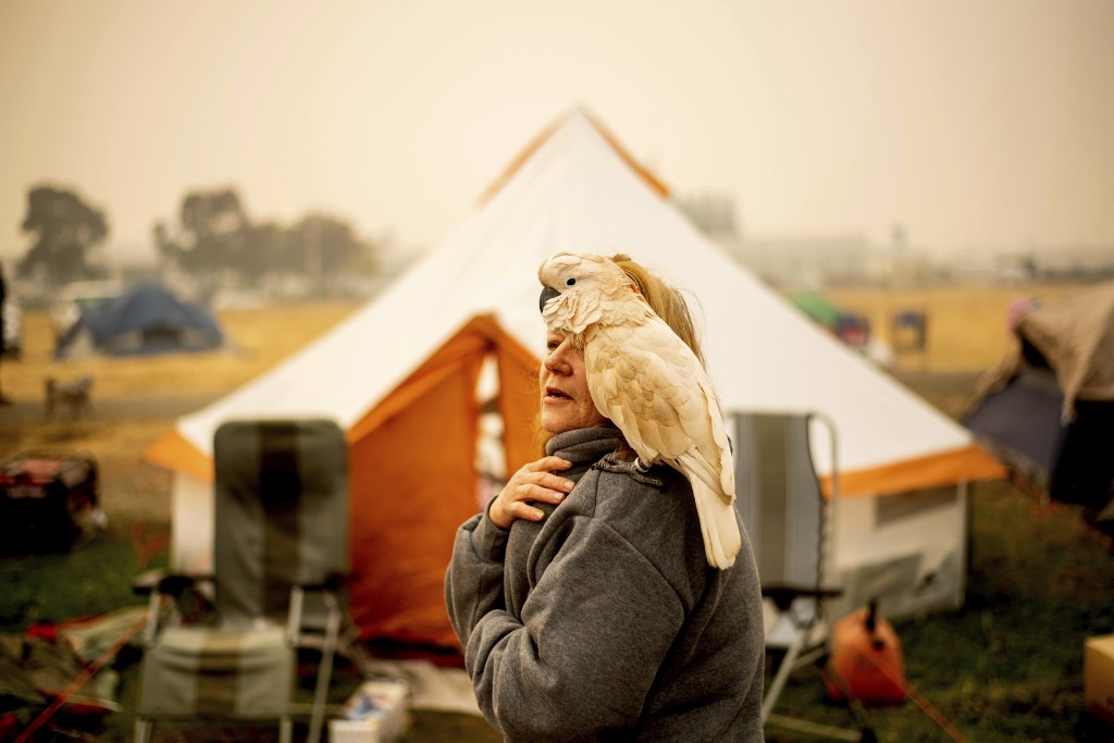 Suzanne Kaksonen, an evacuee of the Camp Fire, and her cockatoo Buddy camp at a makeshift shelter outside a Walmart store in Chico, Calif., on Wednesd...