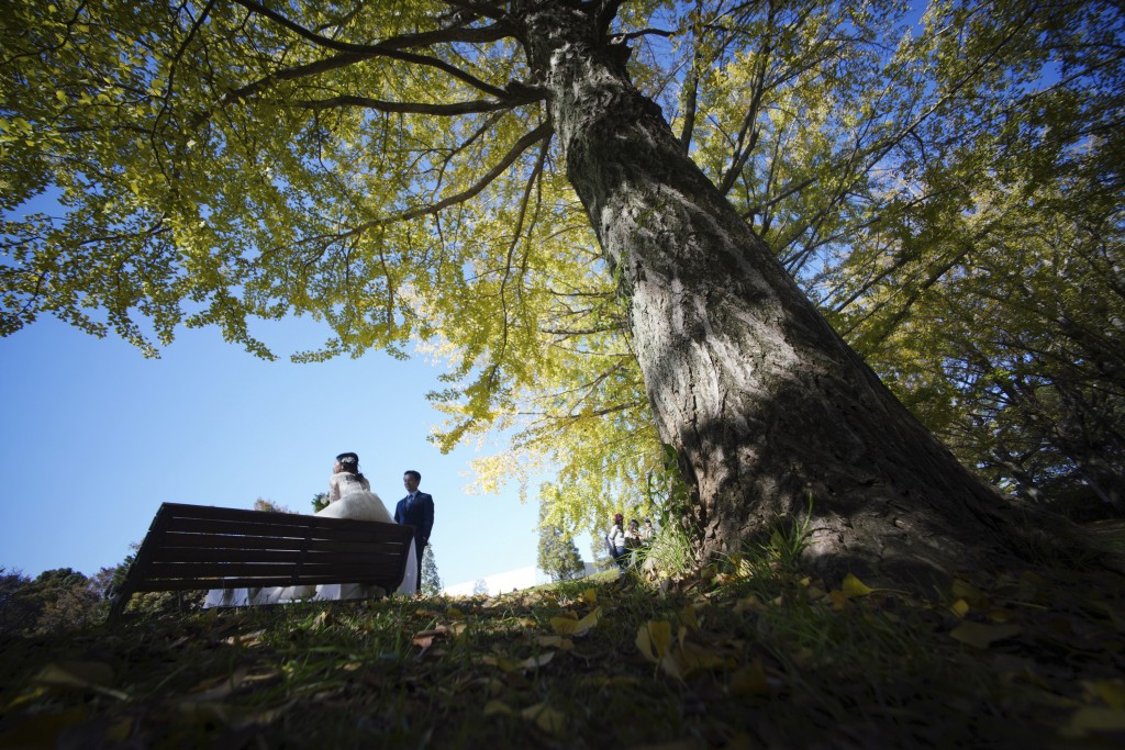 In this Thursday, Nov. 15, 2018, file photo, a man and a woman take wedding photos near the autumn colored ginkgo tree-lined avenue on a cool day at S