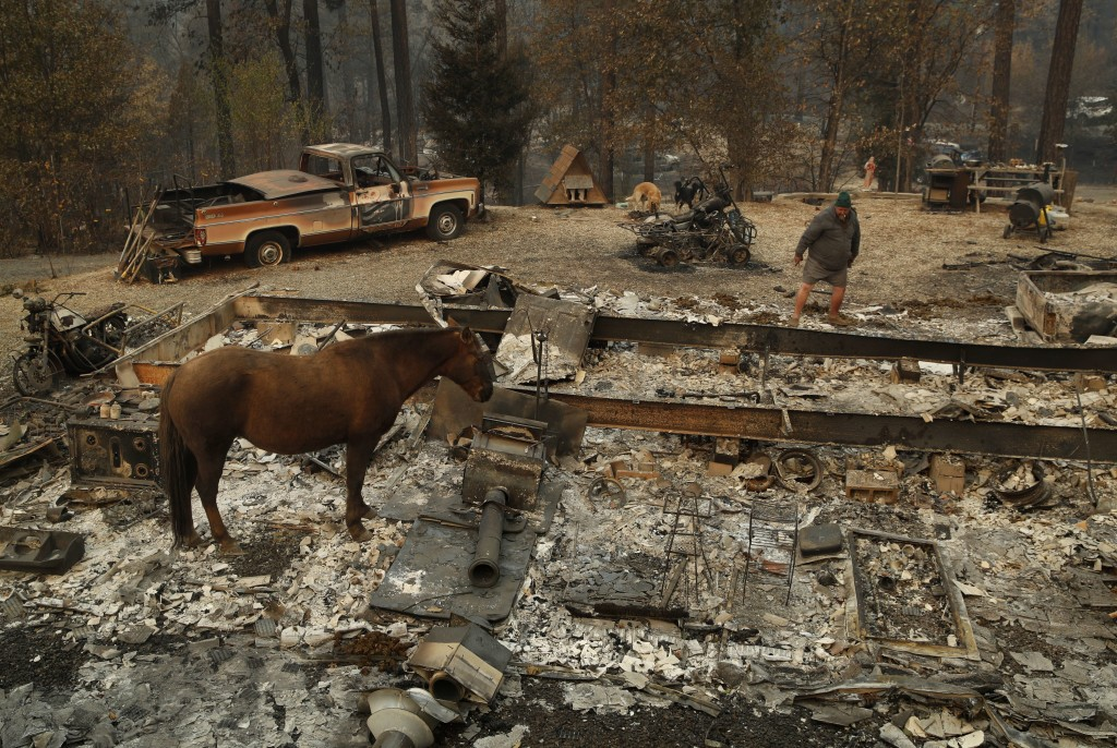 "In this Nov. 15, 2018, photo, Troy Miller looks through what remains of his burned out home as his horse Sally stands nearby in Concow, Calif. ""It jus..."
