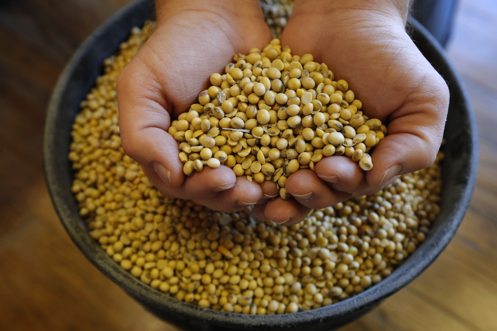 In this Nov. 21, 2018, photo, Justin Roth holds a handful of soybeans at the Brooklyn Elevator in Brooklyn, Iowa. Farmers still working to get out the...