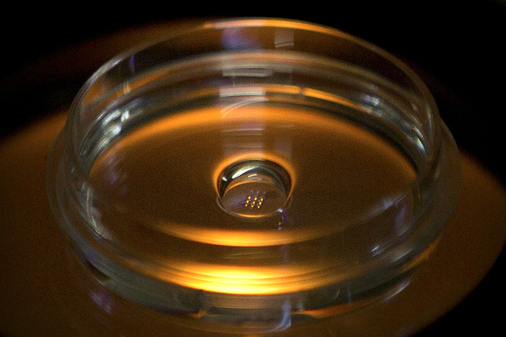 FILE - In this Oct. 9, 2018, file photo, a microplate containing embryos that have been injected with Cas9 protein and PCSK9 sgRNA is seen in a labora