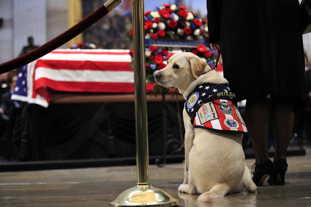 Sully, former President George H.W. Bush's service dog, pays his respect to President Bush as he lie in state at the U.S. Capitol in Washington, Tuesd