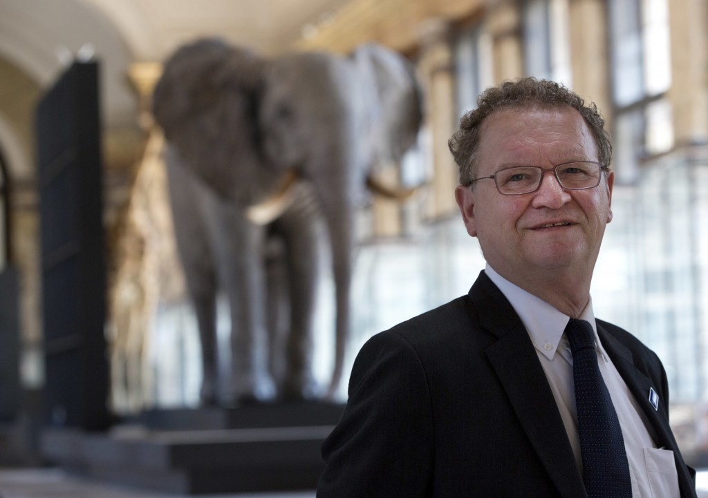 Museum Director Guido Gryseels poses in front of a stuffed elephant at the Africa Museum in Tervuren, Belgium, Friday, Aug. 3, 2018. The museum is reo...