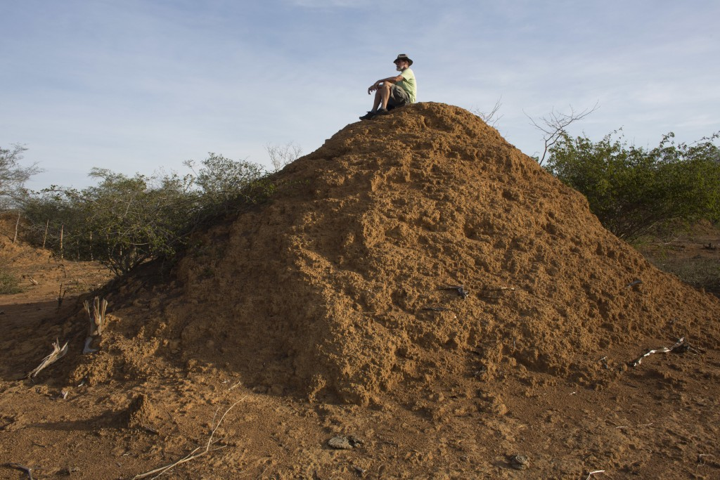 American botanist Roy Funch sits on top of a giant termite mound near Palmeiras, Brazil, on Saturday, Nov. 24, 2018. In Brazil's rugged northeast, ter