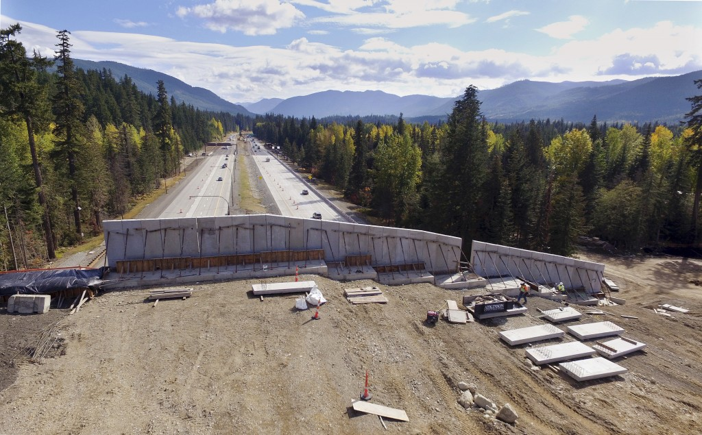 In this photo taken Oct. 4, 2018, Interstate 90 traffic passes beneath a high-sided wildlife bridge under construction on Snoqualmie Pass, Wash. The s...