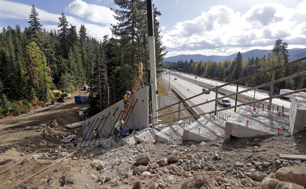 In this photo taken Oct. 4, 2018, workers place tall panels on a wildlife bridge under construction as traffic on Interstate 90 passes below on Snoqua...