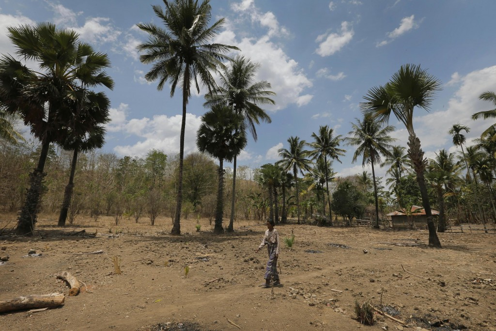 In this Oct. 22, 2018, photo, a woman walks across the dry dirt grounds of O'of village in West Timor, Indonesia. The region is one of the driest part