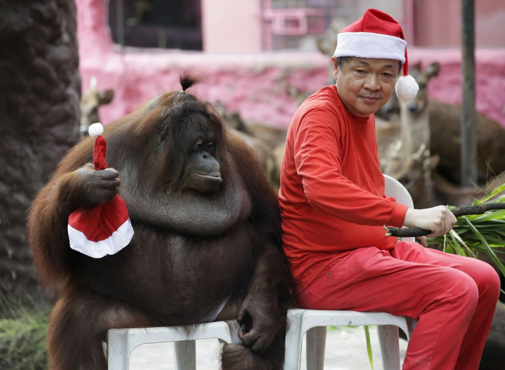 """In this Friday, Dec. 21, 2018, file photo, zoo owner Manny Tangco sits beside an orangutan named """"Pacquiao"""" while wearing Santa Claus hats as part of ..."""