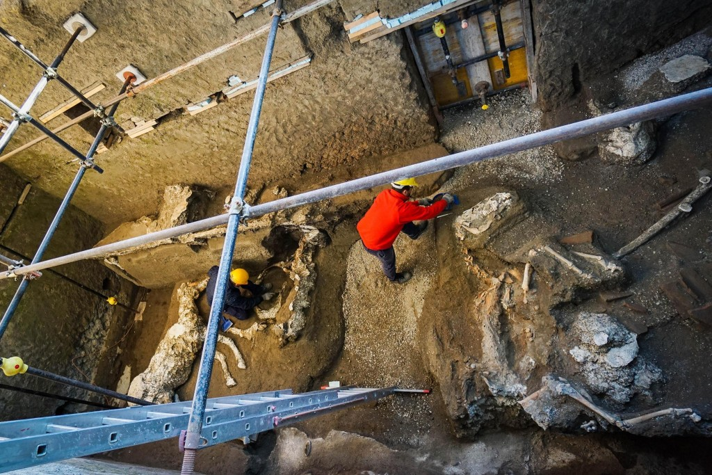 An archaeologist inspects the remains of a horse skeleton in the Pompeii archaeological site, Italy, Sunday, Dec. 23, 2018. A tall horse, well-groomed...