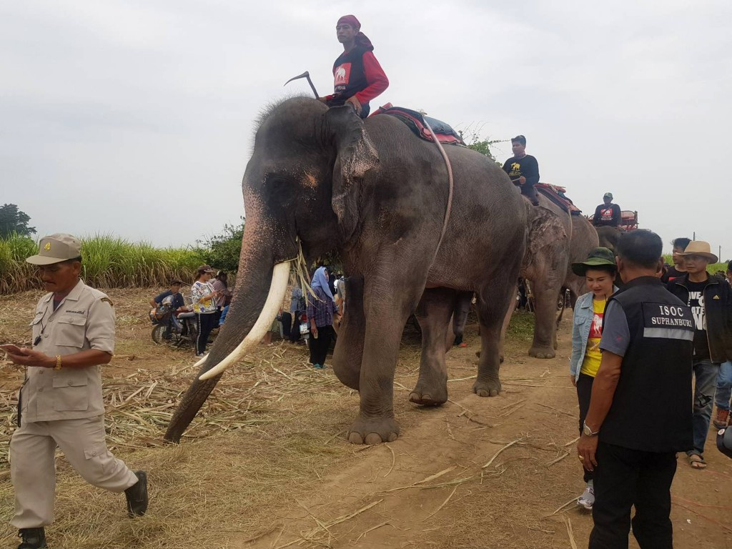 In this Sunday, Dec. 23, 2018, photo released by Suphan Buri City, four mahouts and their elephants start a search operation for a two-year-old Myanma...