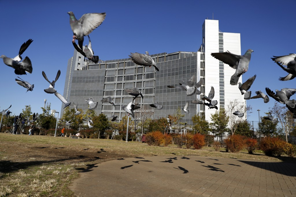 Pigeons fly near Tokyo Detention Center, where former Nissan chairman Carlos Ghosn and another former executive Greg Kelly, are being detained, in Tok...