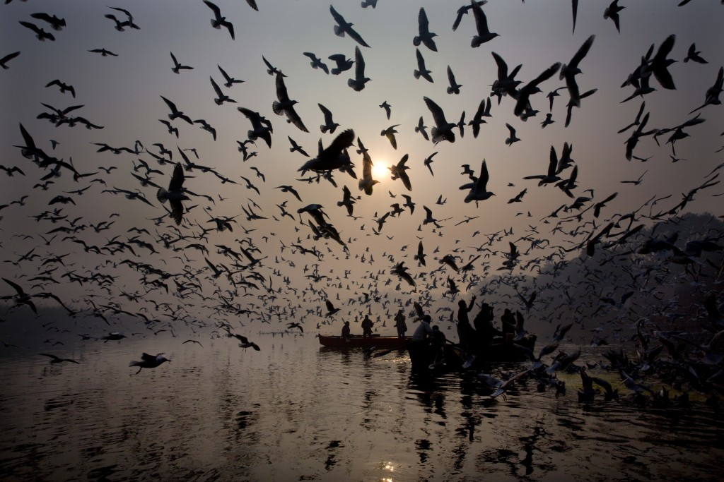 In this Tuesday, Jan. 1, 2019, file photo, Indians feed seagulls from the boat in the river Yamuna on the first day of the new year in New Delhi, Indi...