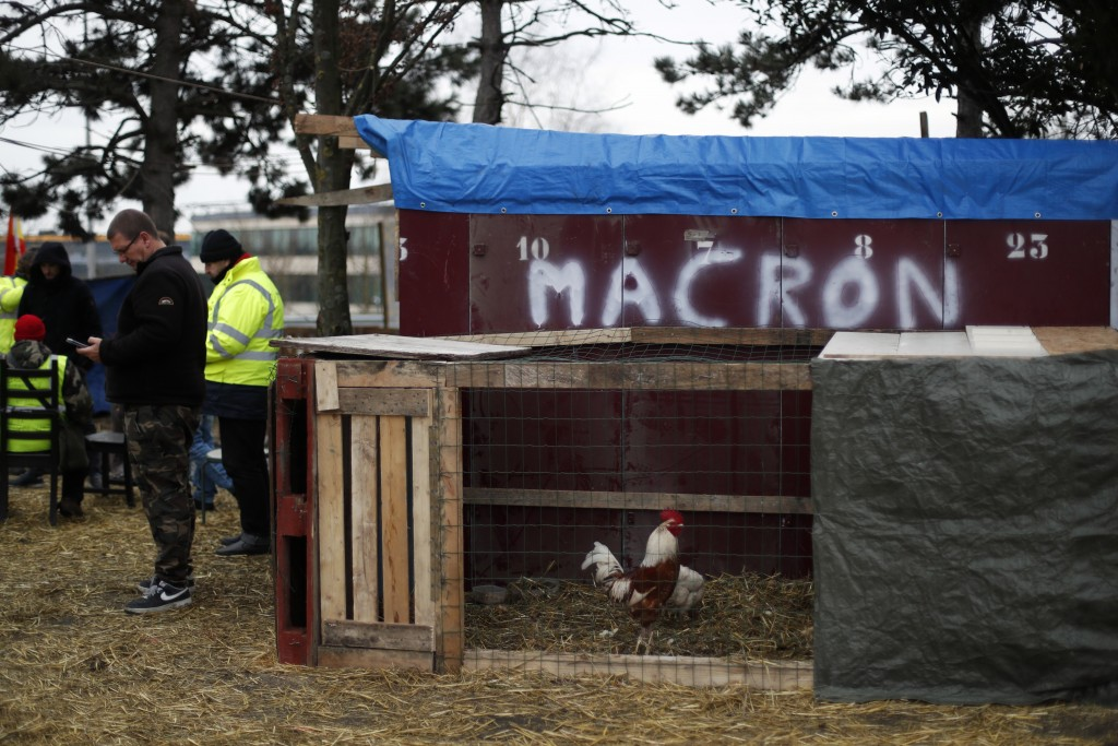 A rooster is caged on a roundabout occupied by yellow vests protestors near Senlis, north of Paris, Thursday, Jan. 10, 2019. With its makeshift grocer